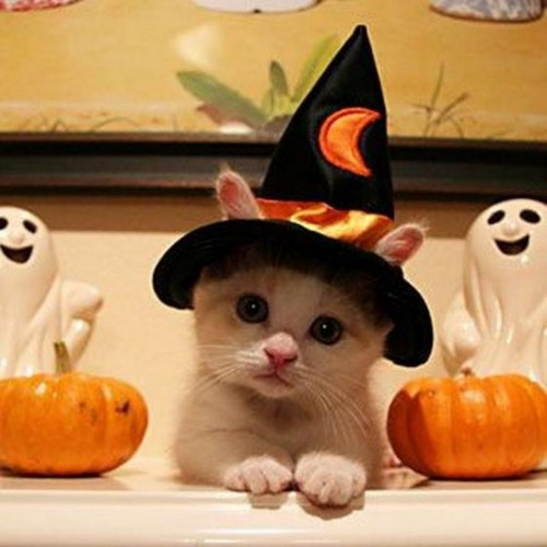 """Chú mèo Hallowen"""