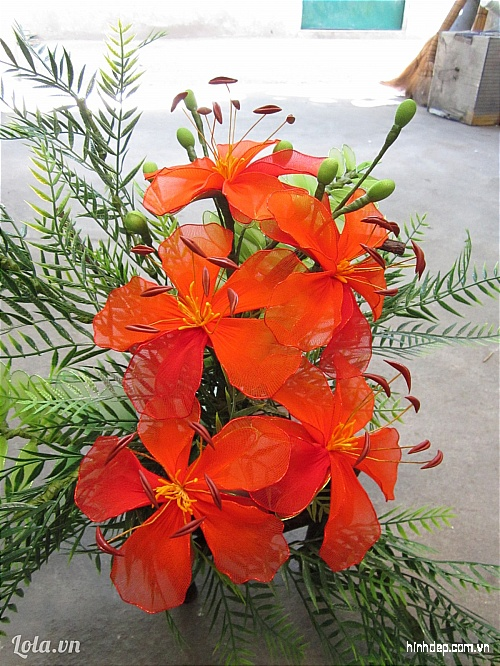 những hình ảnh đẹp về hoa anh đào