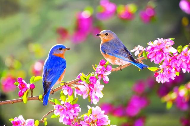 mùa xuân mùa xuân mùa xuân