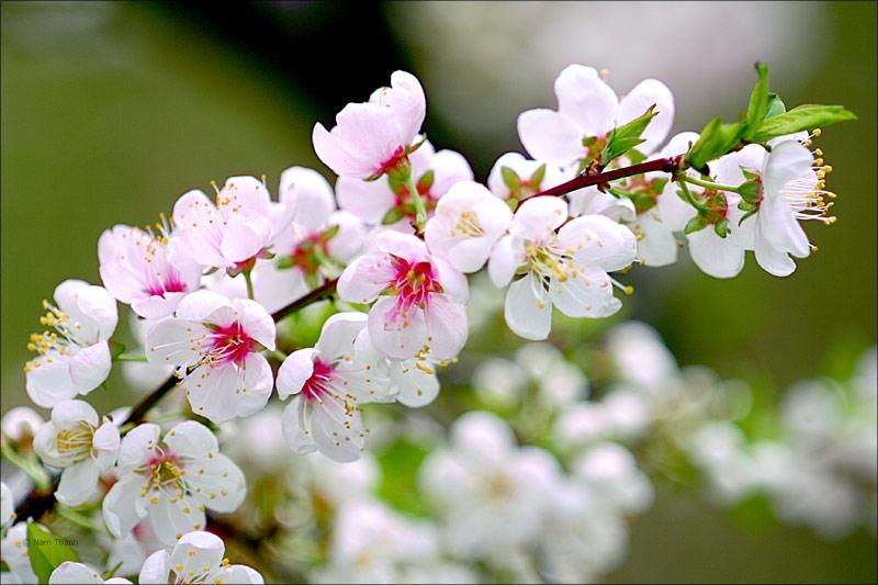 mùa xuân