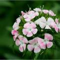 hoa dep