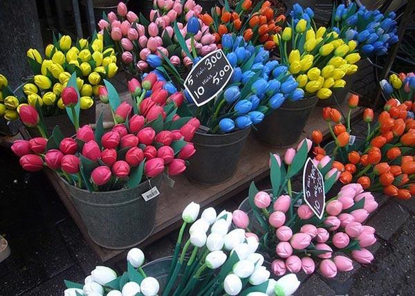cho hoa noi