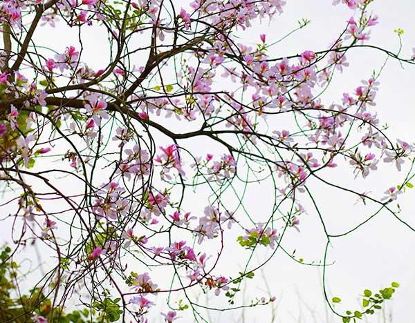 Ảnh đẹp hoa bạn tháng 3