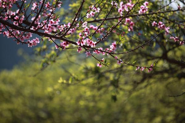 Hình ảnh đẹp mùa xuân Hà Giang
