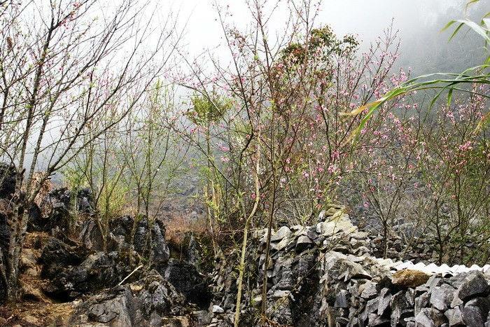 Hình ảnh đẹp về mùa xuân ở Hà Giang