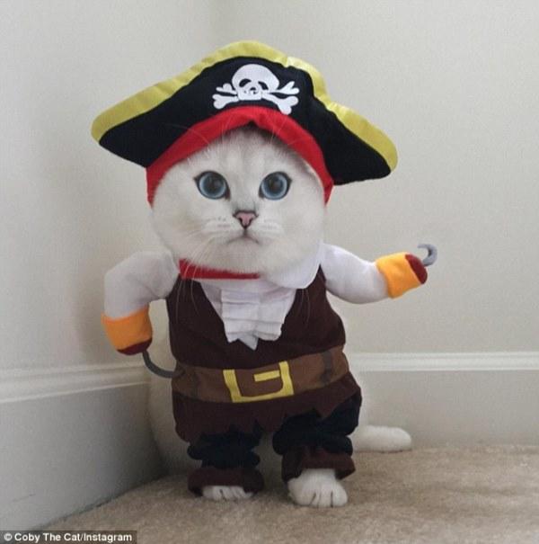 Chú mèo mắt xanh