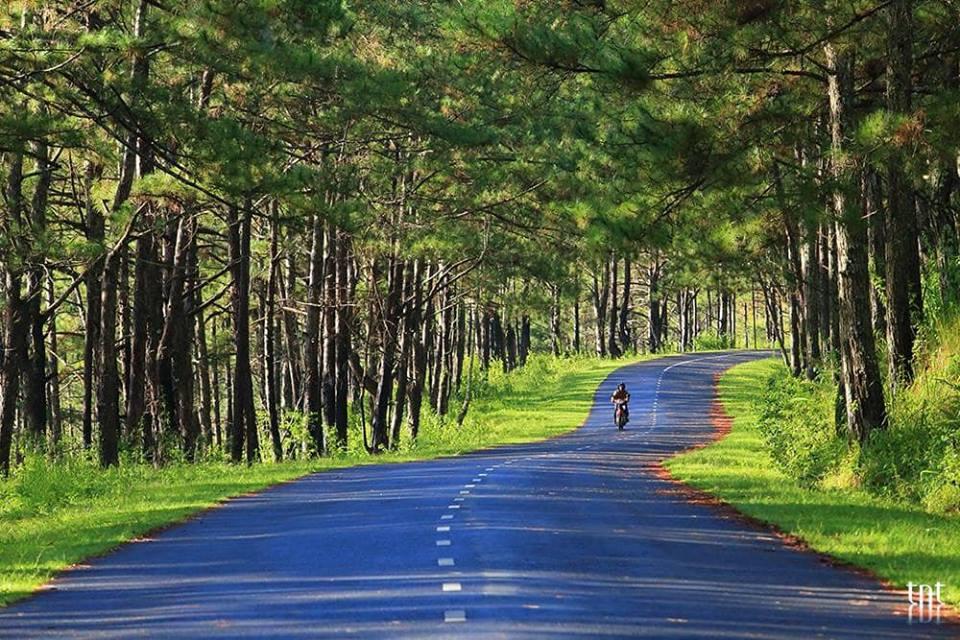 Con đường màu xanh bình yên