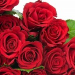 Hình đẹp hoa hồng tình yêu