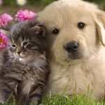 Hình ảnh đẹp về tình bạn