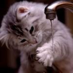 Hình ảnh ngộ nghĩnh về loài mèo