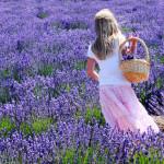 Dịu dàng sắc tím oải hương vùng Provence