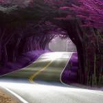Những con đường độc đáo nhất thế giới