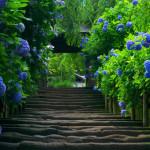 Hình nền đẹp về thiên nhiên