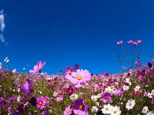 thien duong hoa