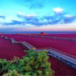 Ngỡ ngàng trước vẻ đẹp mê hoặc của bãi Biển Đỏ ở Trung Quốc