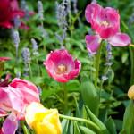 Ngắm vẻ đẹp tinh tế của mùa xuân qua bộ sưu tập hình đẹp về hoa