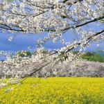 Rộn ràng sắc xuân trong bộ sưu tập ảnh đẹp phong cảnh mùa xuân
