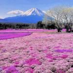 Bộ sưu tập ảnh đẹp về vẻ đẹp kỳ diệu của thiên nhiên
