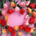 hoa hong