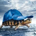 Bộ ảnh nền động vật 3D ấn tượng