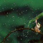 Chùm ảnh trú mưa siêu dễ thương của động vật