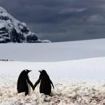 Khoảnh khắc tình yêu cực dễ thương trong thế giới động vật