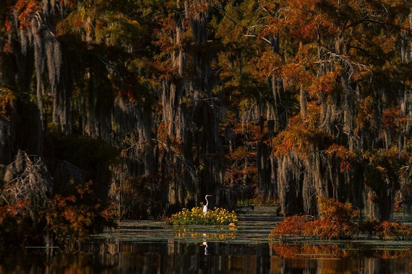 anh-dep-Louisiana