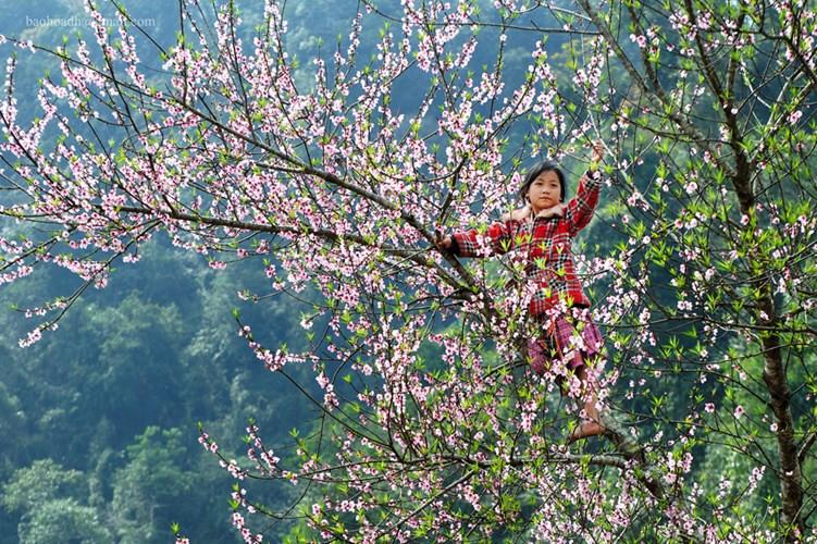 Hình ảnh đẹp những ngày xuân ở Hà Giang