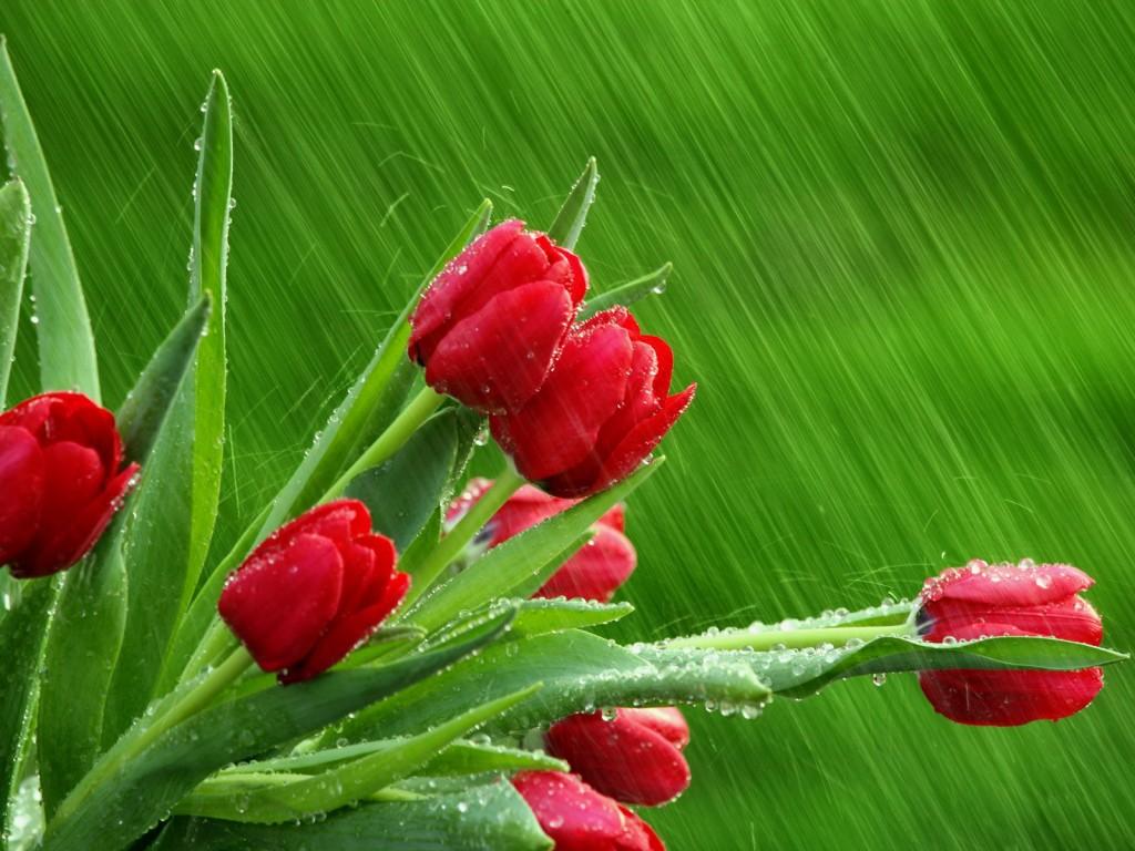 Ảnh hoa đẹp ngày 8/3 năm 2016-2017