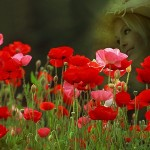 Hình ảnh hoa đẹp ngày 8.3 gửi tặng người thân yêu