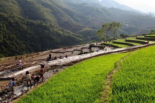 Vẻ đẹp củaThung Lũng Mường Hoa Sa Pa