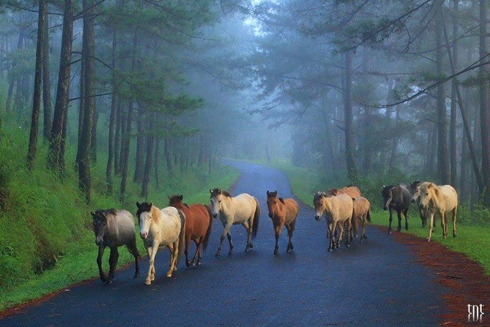 Đàn ngựa bình yên sải vó trên con đường màu xanh