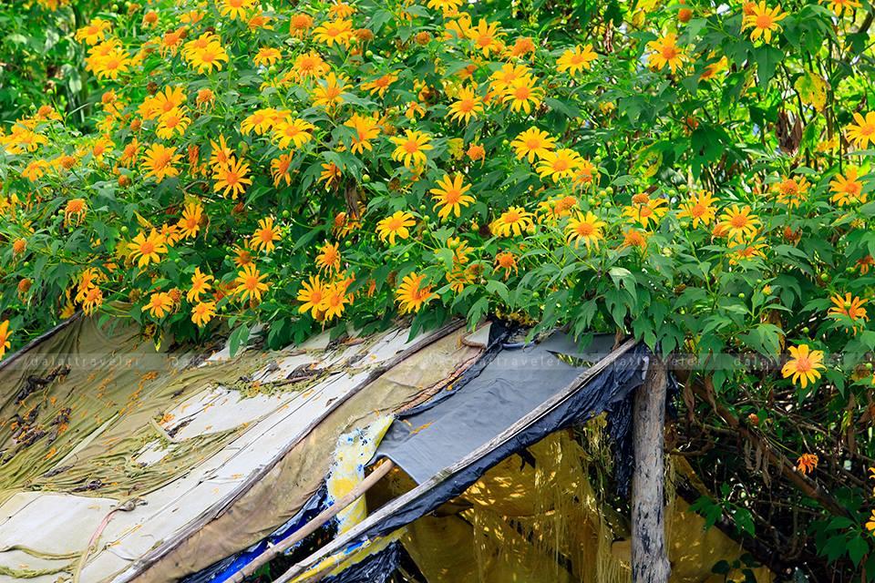 Một lùm hoa trong nắng