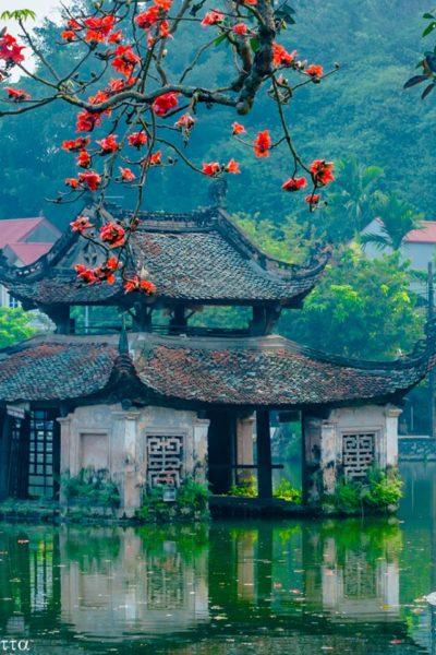 Hoa gạo ở chùa Thầy
