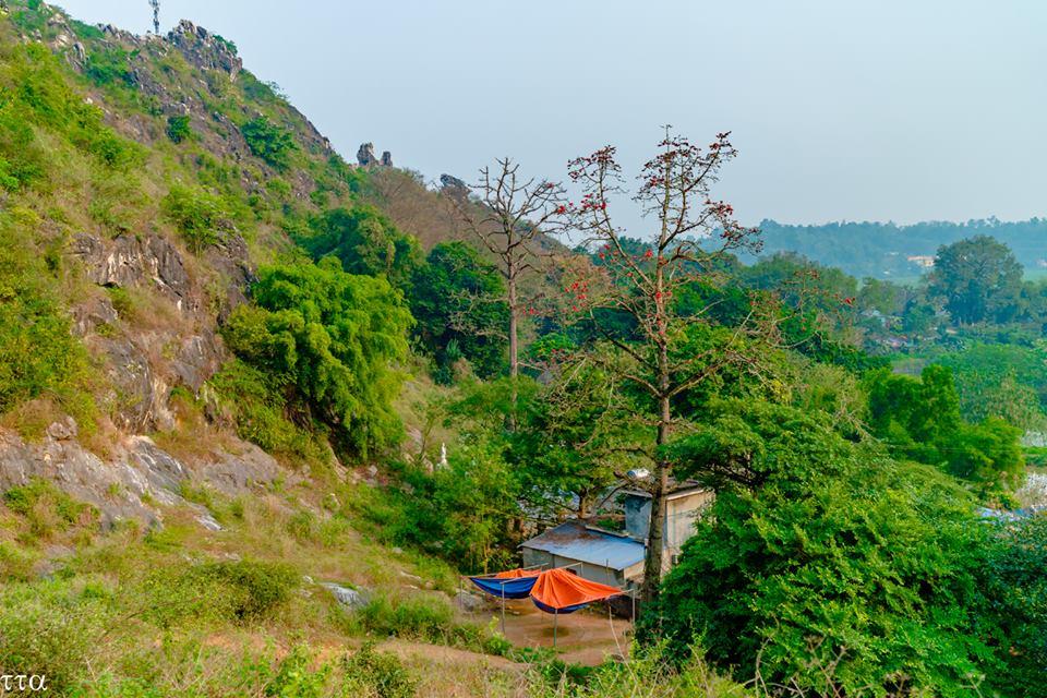 Cây gạo dưới chân núi Thầy