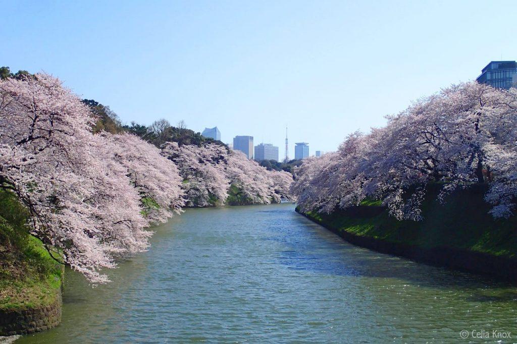 cong-vien-hoa-anh-dao-Hibiya Park