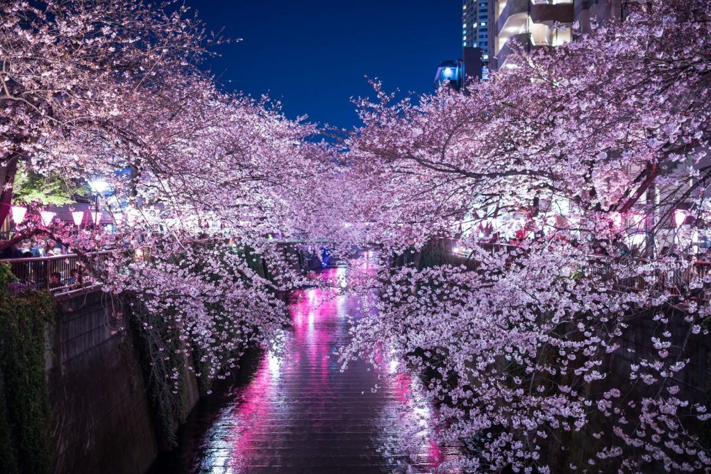 hình ảnh nakameguro về đêm